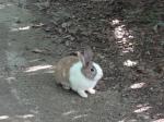 bunny - Maebongsan
